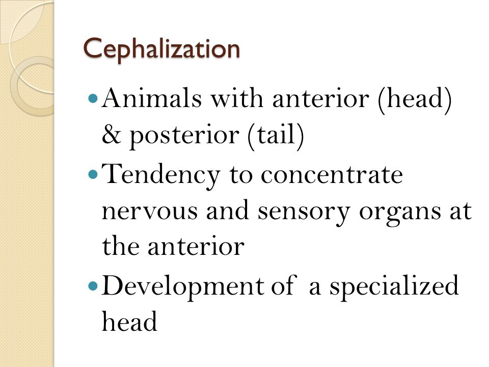 Cephalization Animals with anterior (head) & posterior (tail) Tendency to concentrate nervous and sensory organs at the anterior Development of a specialized head