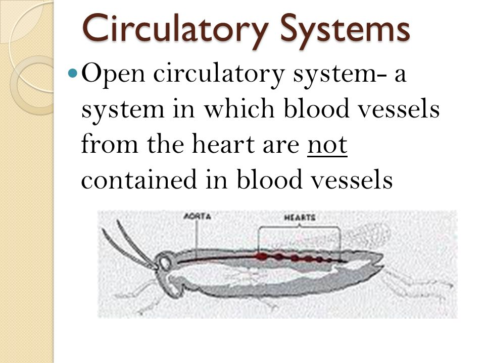 Circulatory Systems Open circulatory system- a system in which blood vessels from the heart are not contained in blood vessels