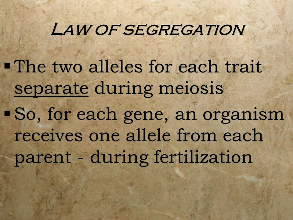 Law of segregation The two alleles for each trait separate during meiosis So, for each gene, an organism receives one allele from each parent - during