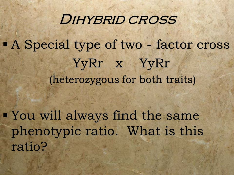 Dihybrid cross A Special type of two - factor cross YyRr x YyRr (heterozygous for both traits) You will always find the same phenotypic ratio. What is