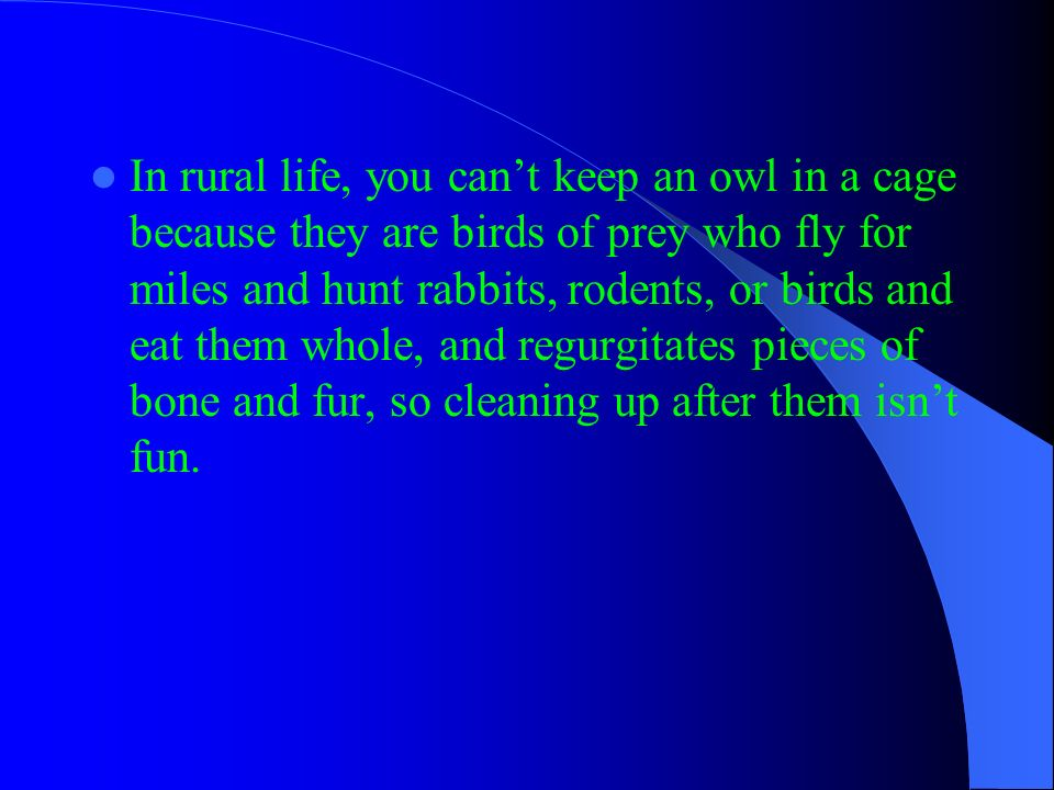 In rural life, you cant keep an owl in a cage because they are birds of prey who fly for miles and hunt rabbits, rodents, or birds and eat them whole,