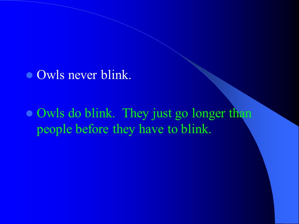 Owls never blink. Owls do blink. They just go longer than people before they have to blink.