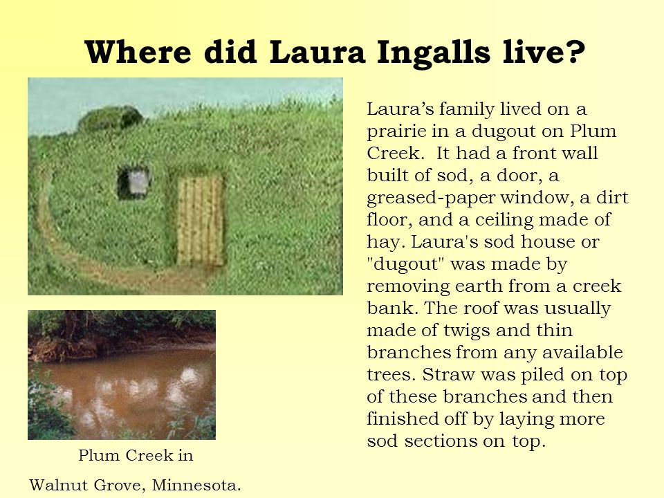 Where did Laura Ingalls live? Plum Creek in Walnut Grove, Minnesota. Lauras family lived on a prairie in a dugout on Plum Creek. It had a front wall b