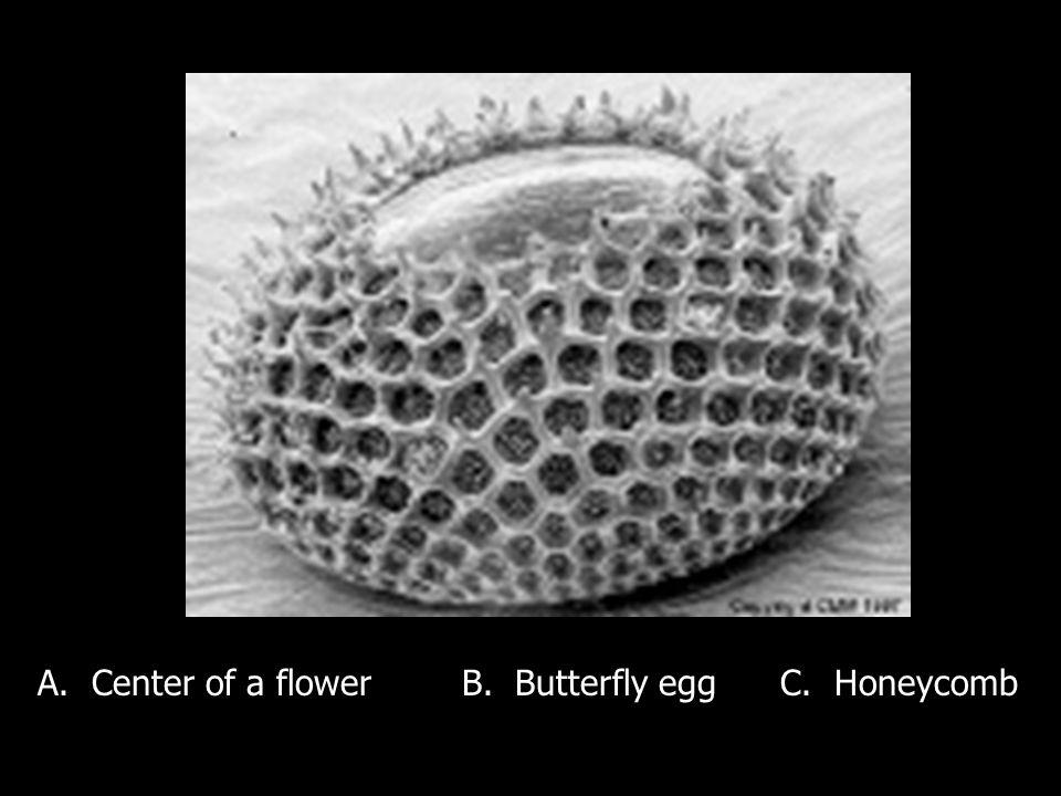 A. Center of a flowerB. Butterfly eggC. Honeycomb