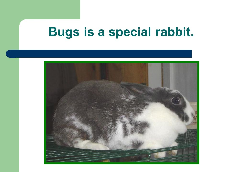 Bugs is a special rabbit.