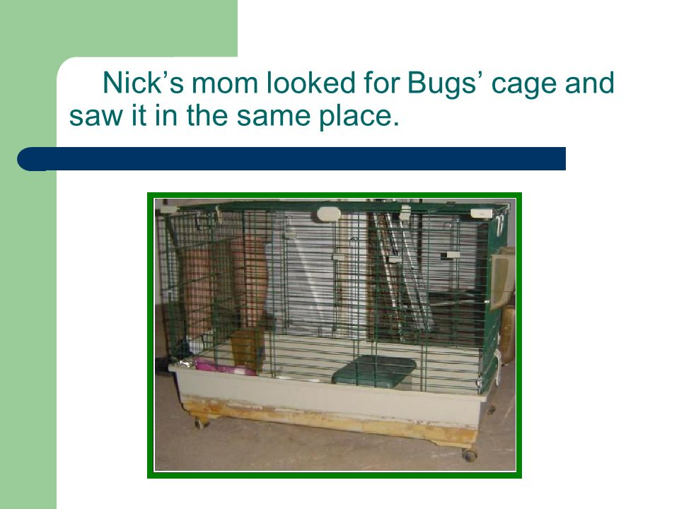 Nicks mom looked for Bugs cage and saw it in the same place.