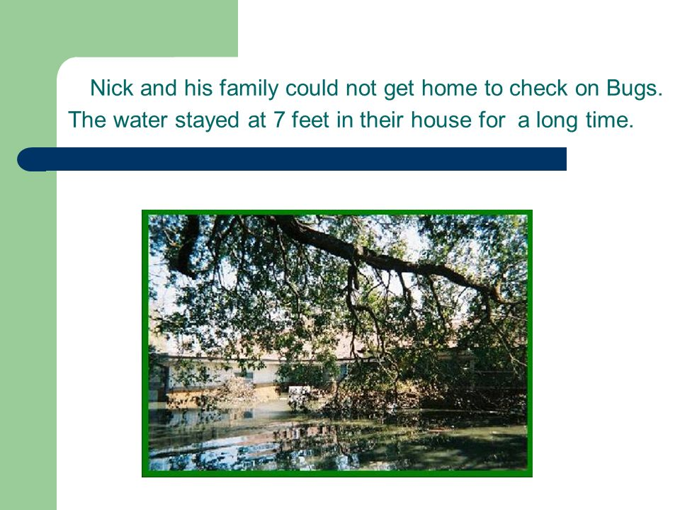 Nick and his family could not get home to check on Bugs.