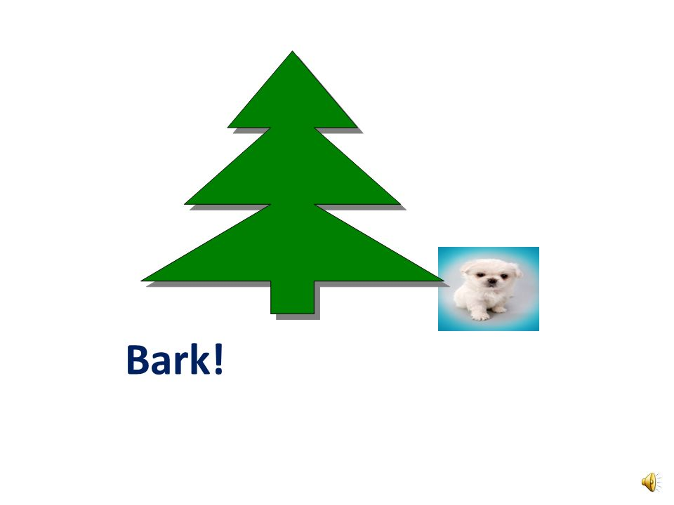 What is a dogs favorite part of a tree