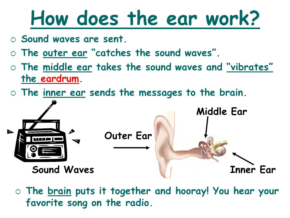How does the ear work? Sound Waves Sound waves are sent. The outer ear catches the sound waves. The middle ear takes the sound waves and vibrates the