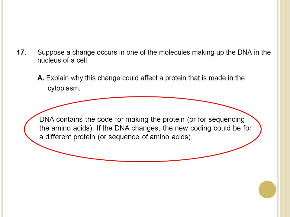 DNA contains the code for making the protein (or for sequencing the amino acids).