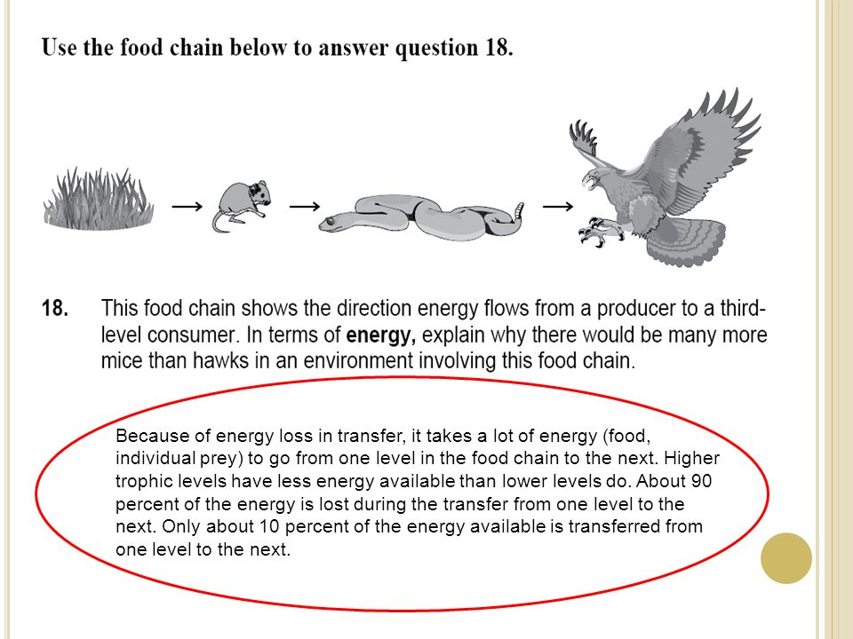 Because of energy loss in transfer, it takes a lot of energy (food, individual prey) to go from one level in the food chain to the next. Higher trophi