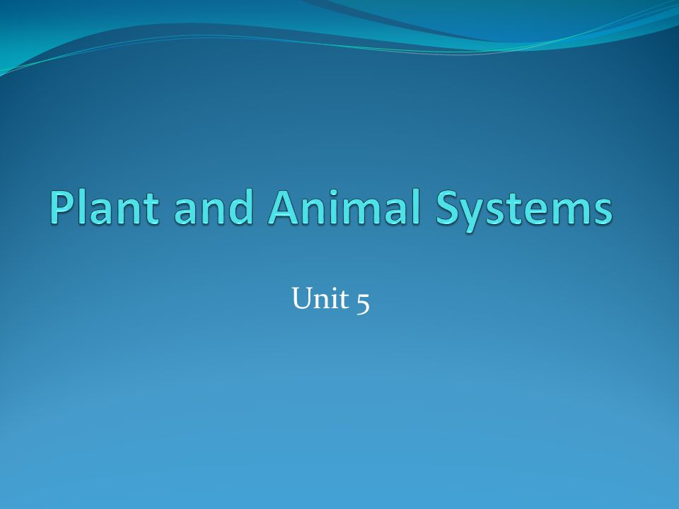 Organism Any living thing Example: plant, animal