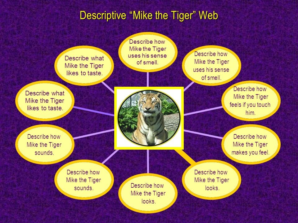 Meet Mike the Tiger Describe how Mike the Tiger uses his sense of smell. Describe how Mike the Tiger uses his sense of smell. Describe how Mike the Ti
