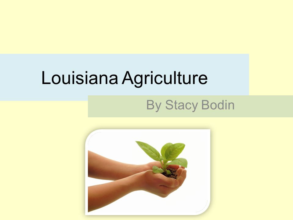 Louisiana Agriculture By Stacy Bodin