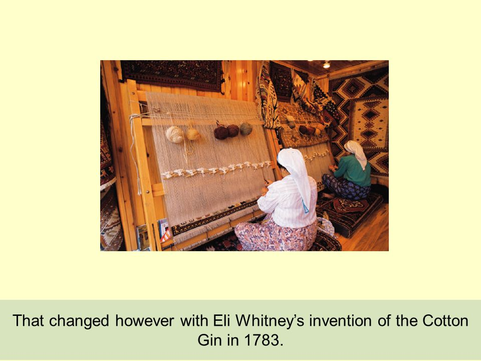 That changed however with Eli Whitneys invention of the Cotton Gin in 1783.