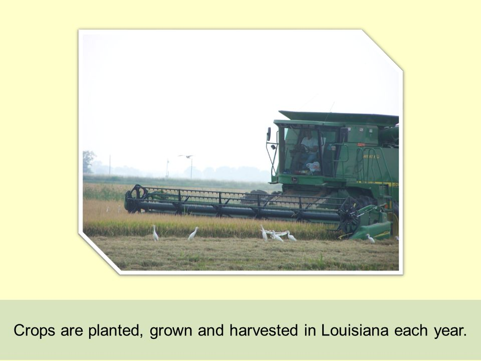 Crops are planted, grown and harvested in Louisiana each year.