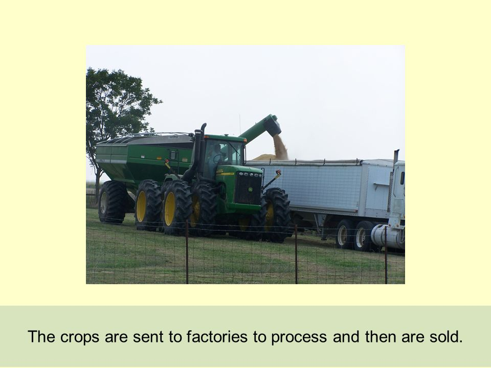The crops are sent to factories to process and then are sold.