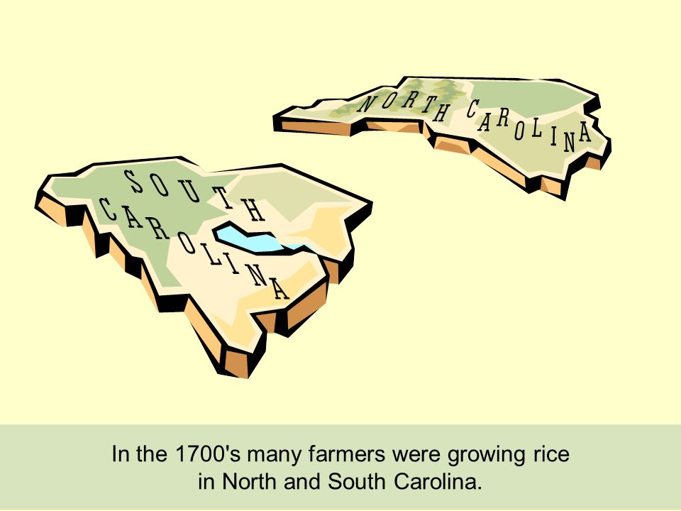 In the 1700 s many farmers were growing rice in North and South Carolina.