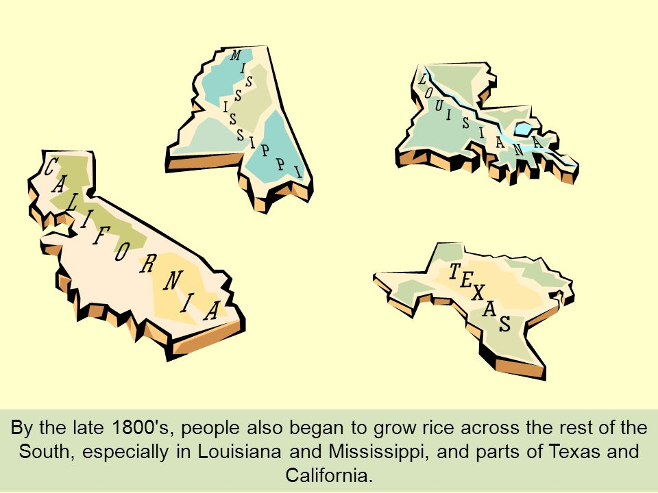 By the late 1800 s, people also began to grow rice across the rest of the South, especially in Louisiana and Mississippi, and parts of Texas and California.