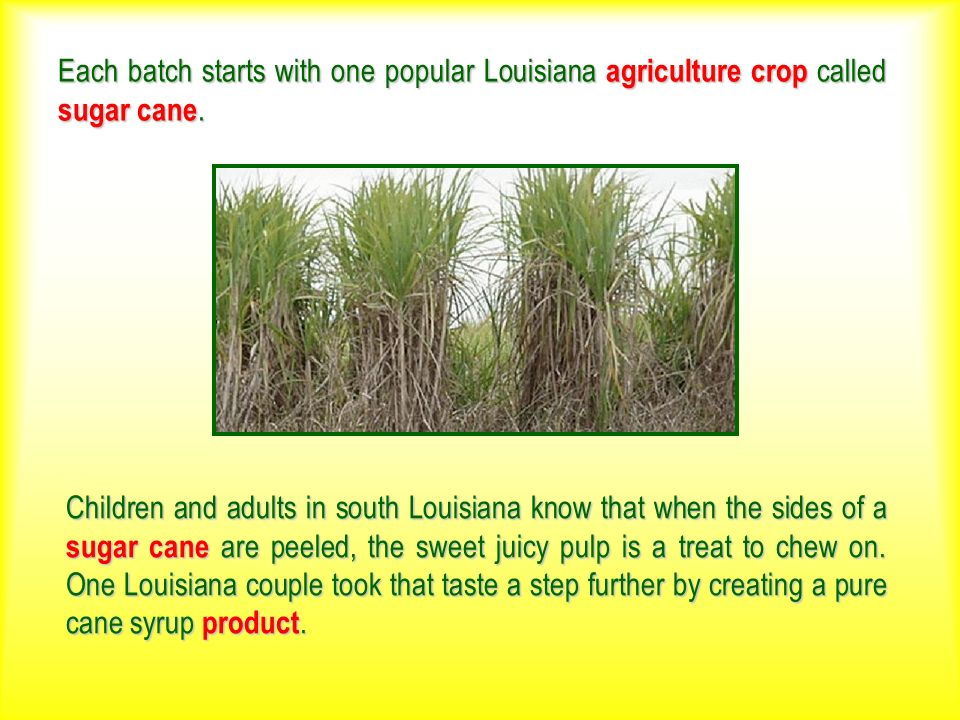 Each batch starts with one popular Louisiana agriculture crop called sugar cane. Children and adults in south Louisiana know that when the sides of a