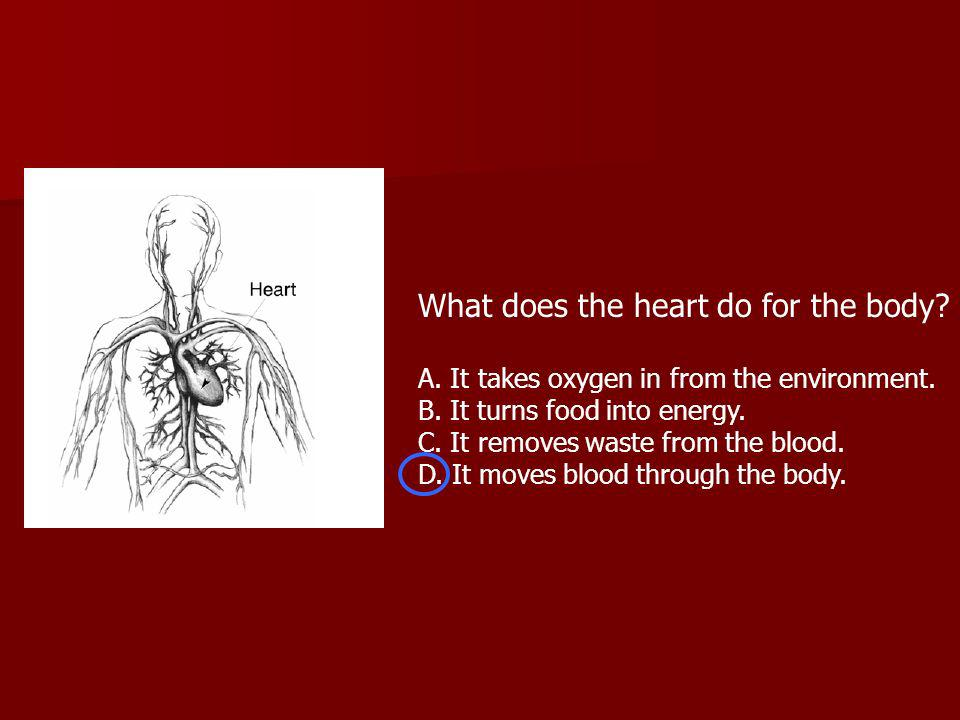 What does the heart do for the body. A. It takes oxygen in from the environment.