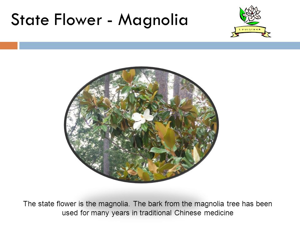 State Flower - Magnolia The state flower is the magnolia.