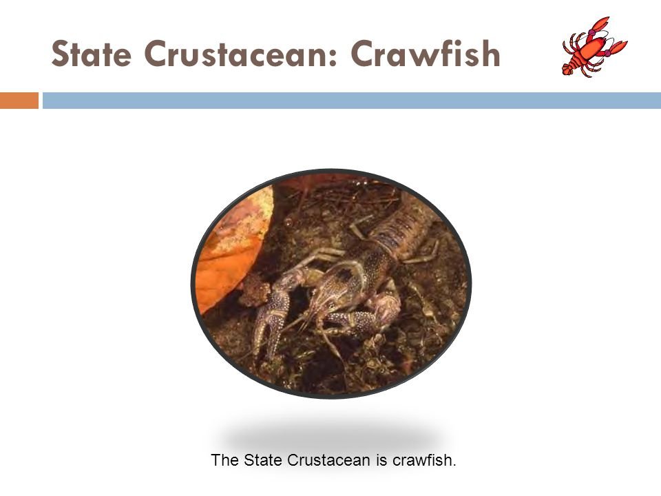 State Crustacean: Crawfish The State Crustacean is crawfish.