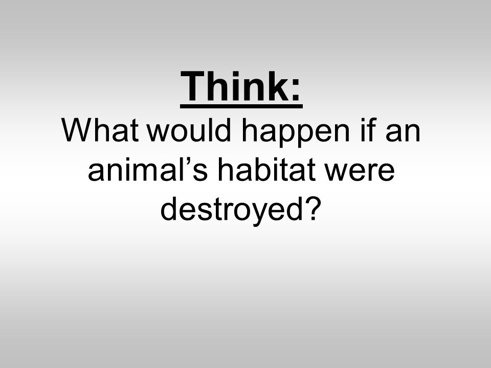 Think: What would happen if an animals habitat were destroyed?