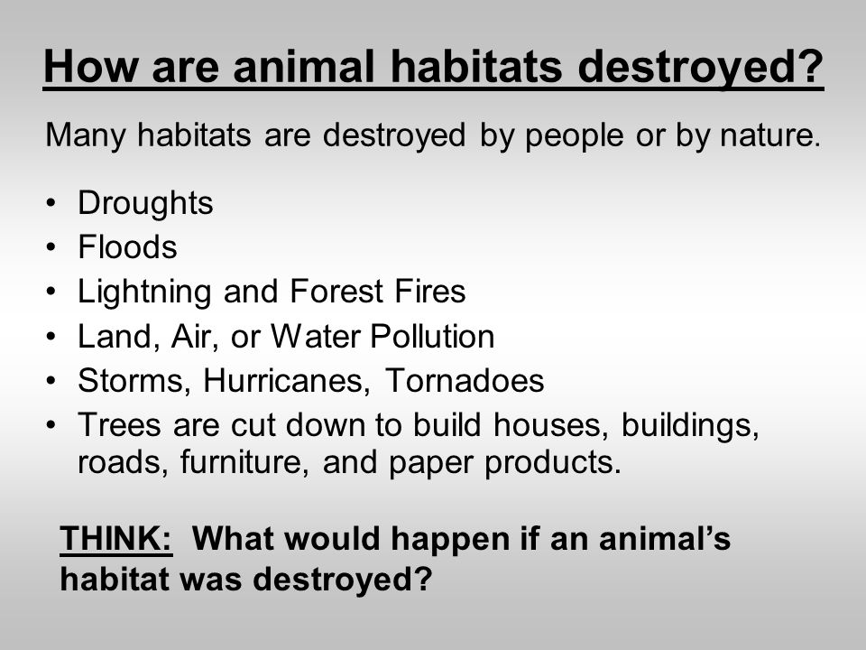 How are animal habitats destroyed? Droughts Floods Lightning and Forest Fires Land, Air, or Water Pollution Storms, Hurricanes, Tornadoes Trees are cu