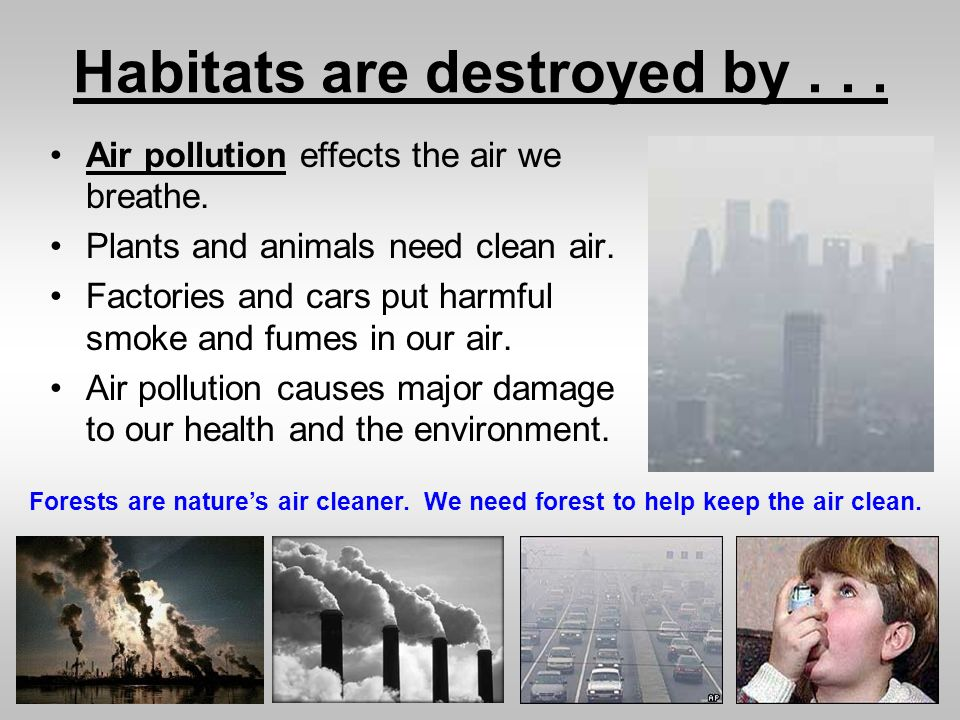 Habitats are destroyed by... Air pollution effects the air we breathe. Plants and animals need clean air. Factories and cars put harmful smoke and fum