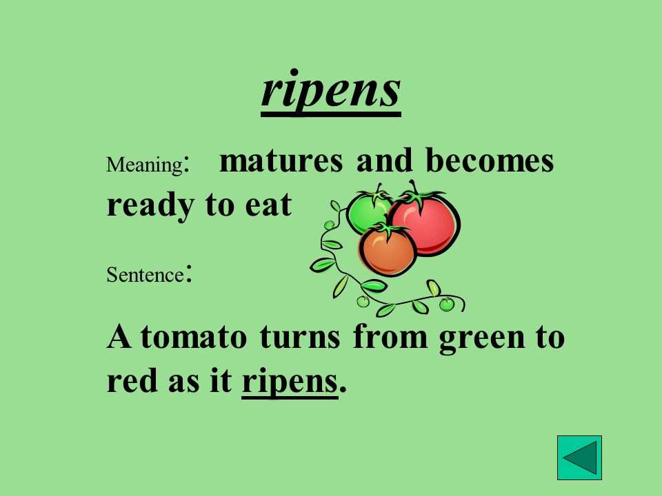 ripens Meaning : matures and becomes ready to eat Sentence : A tomato turns from green to red as it ripens.