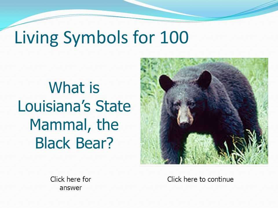 Living Symbols for 100 What is Louisianas State Mammal, the Black Bear.