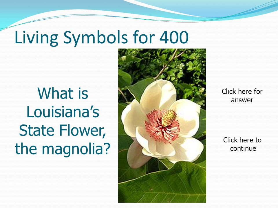 Living Symbols for 400 What is Louisianas State Flower, the magnolia.