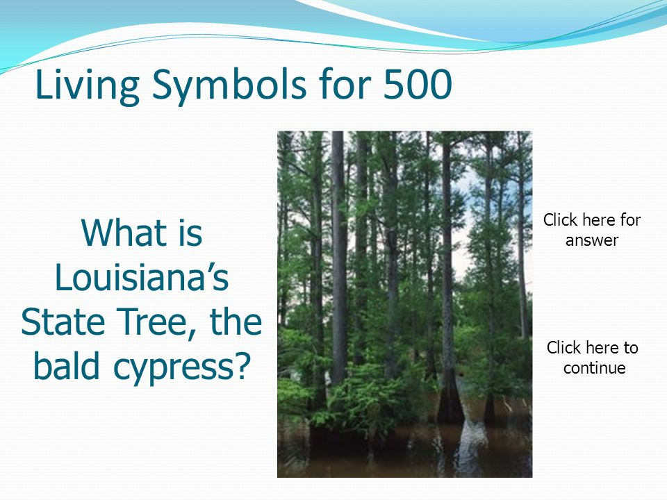 Living Symbols for 500 What is Louisianas State Tree, the bald cypress.