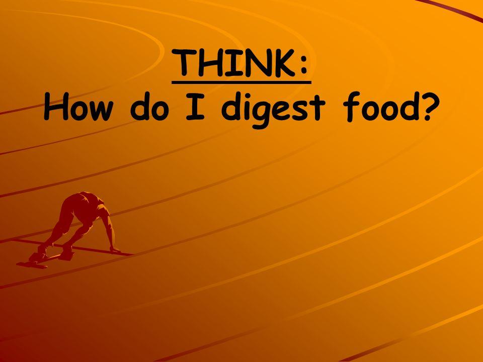 THINK: How do I digest food?