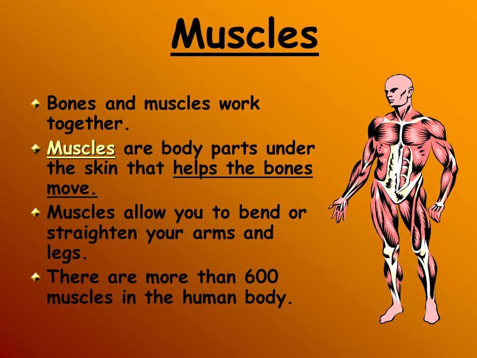 THINK: What do my bones and muscles do?