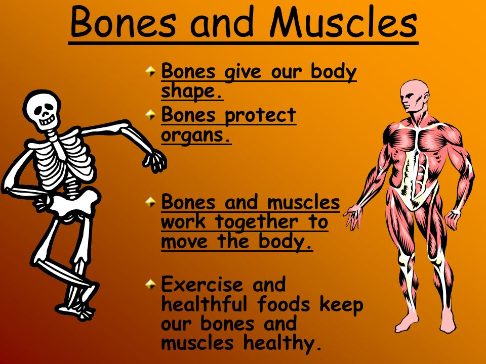 Do you remember how many bones are in your body? b. 206 c. 560 a. 102