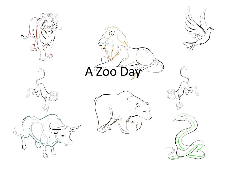A Zoo Day