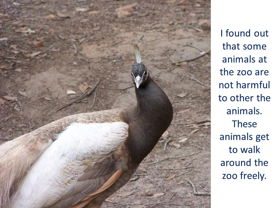 I found out that some animals at the zoo are not harmful to other the animals. These animals get to walk around the zoo freely.