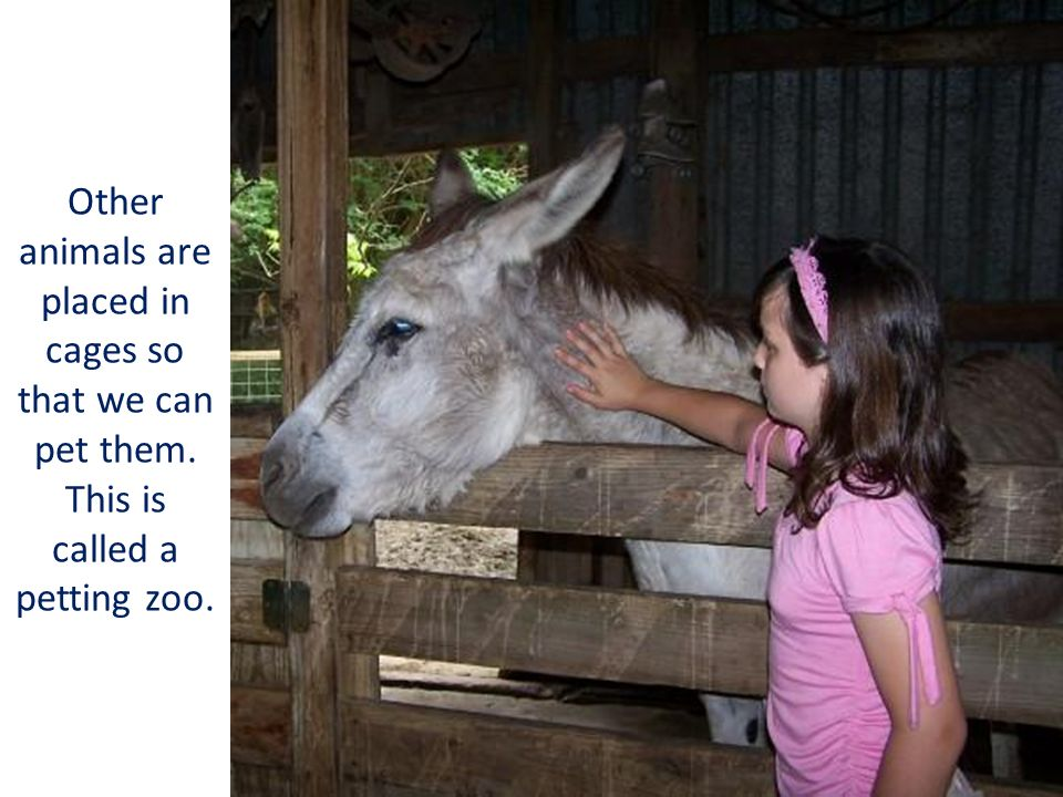 Other animals are placed in cages so that we can pet them. This is called a petting zoo.