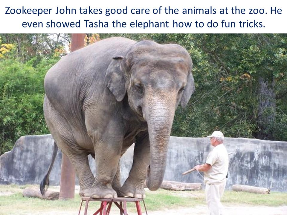 Zookeeper John takes good care of the animals at the zoo. He even showed Tasha the elephant how to do fun tricks.
