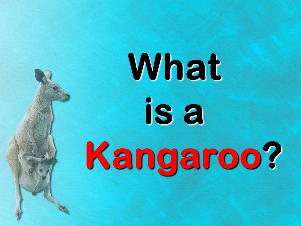 kangarookangaroo kangaroo Have you ever heard of a kangaroo.