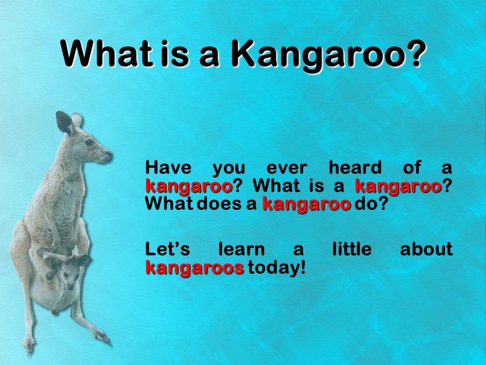 What is a Kangaroo? A kangaroo is an animal.