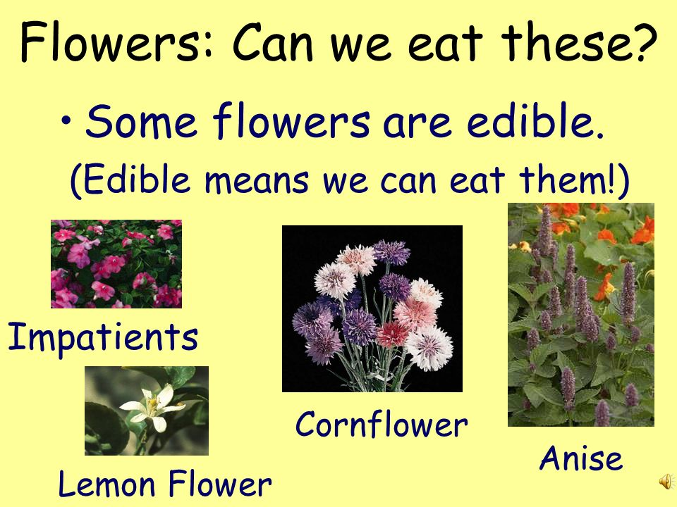 Plant Parts: Flowers Flowers make the seeds of a plant. Flowers provide pollen to insects. Some flowers help to make fruit for the plant.