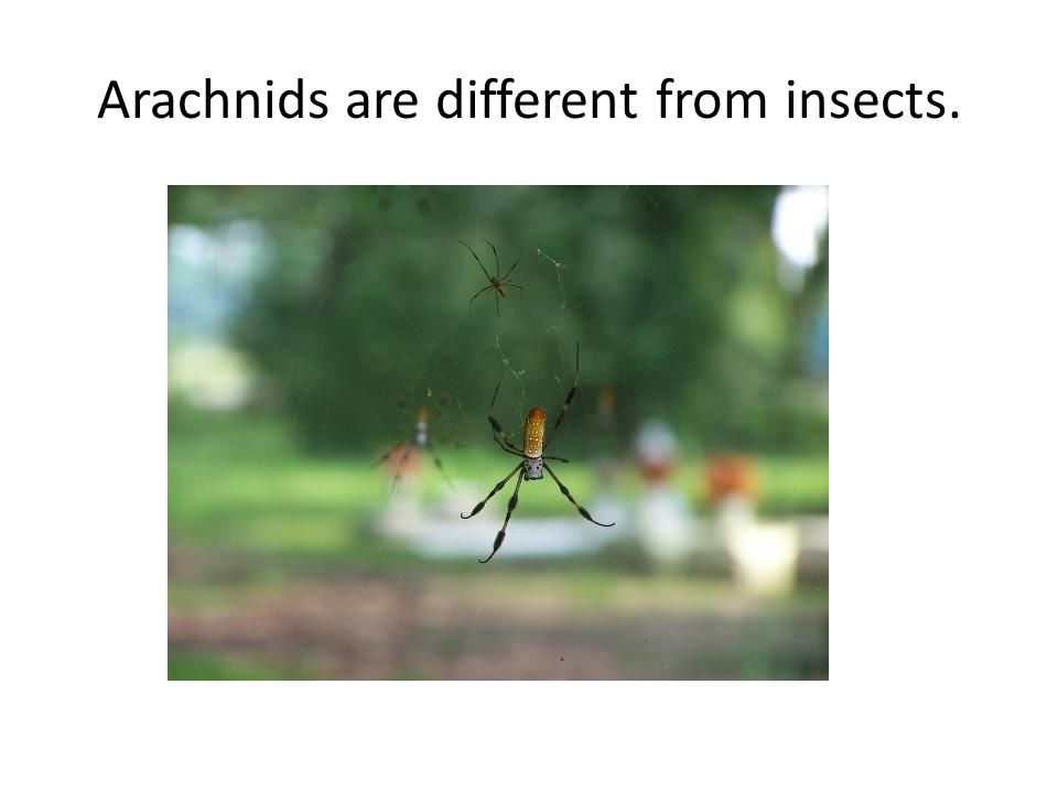 Arachnids are different from insects.