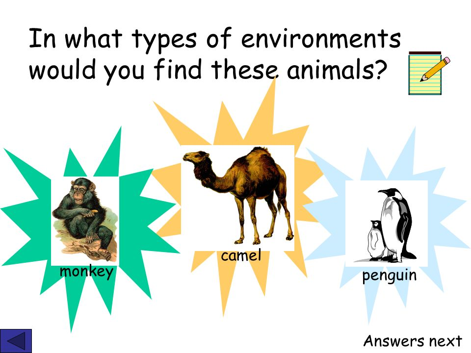 In what types of environments would you find these animals? camel monkey penguin Answers next