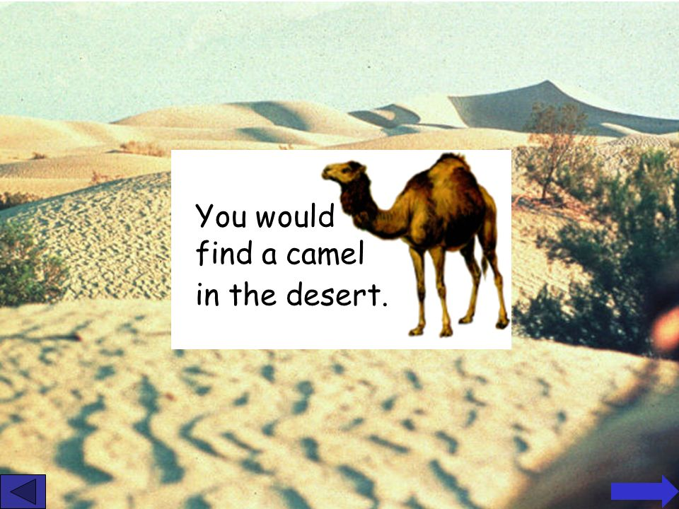 In what types of environments would you find these animals camel monkey penguin Answers next