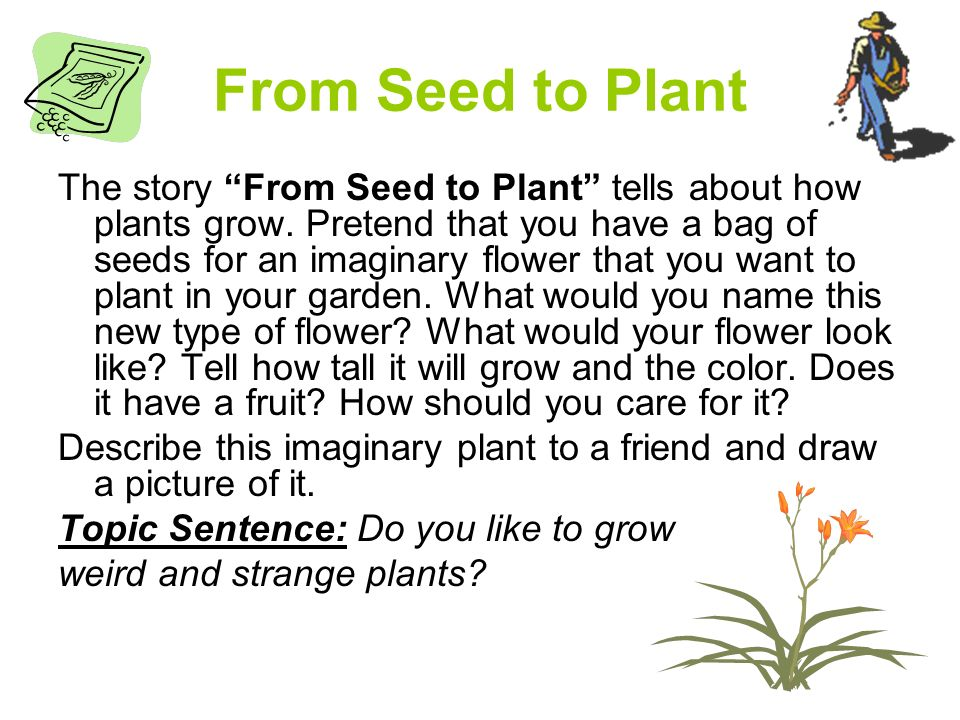 From Seed to Plant The story From Seed to Plant tells about how plants grow.