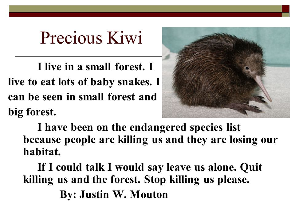 Precious Kiwi I live in a small forest. I live to eat lots of baby snakes. I can be seen in small forest and big forest. I have been on the endangered