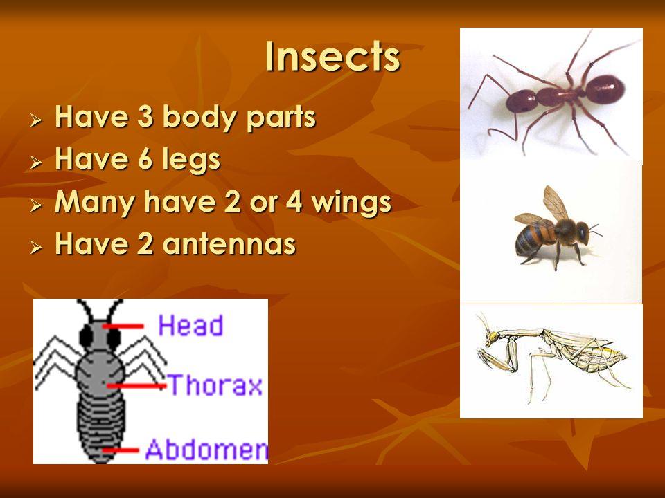 Insects Have 3 body parts Have 3 body parts Have 6 legs Have 6 legs Many have 2 or 4 wings Many have 2 or 4 wings Have 2 antennas Have 2 antennas